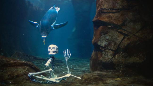 Haunted Aquarium | Kids Out and About Salt Lake City